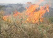 В Невинномысске тушили пожар на городском кладбище