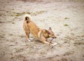 Во всех районах Ставрополя появятся площадки для выгула собак