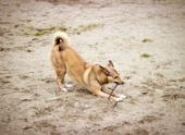 В Ставрополе открыли третью площадку для выгула собак