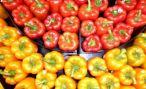 На Ставрополье появится комплекс по выращиванию сладкого перца