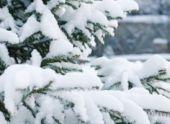 Синоптики пообещали ставропольцам новогоднюю погоду