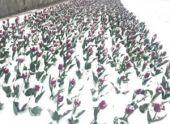 В Железноводск вернулась зима