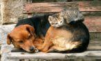 На Ставрополье построят приют для бездомных животных