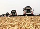 На Ставропольщине собрали 1 млн тонн зерна