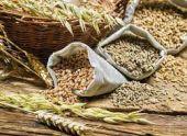 На Ставрополье ухудшился показатель сбора зерновых