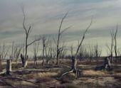 Ставропольский край лишился леса в 60 гектар