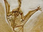У бразильских торговцев изъяли скелет птерозавра