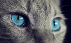 7 видов кошачьего характера