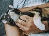 Исследователи обнаружили, какой участок ДНК ответственен за окраску кошачьей шерсти