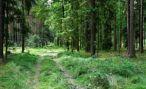 Леса Железноводска увеличились на 18 га